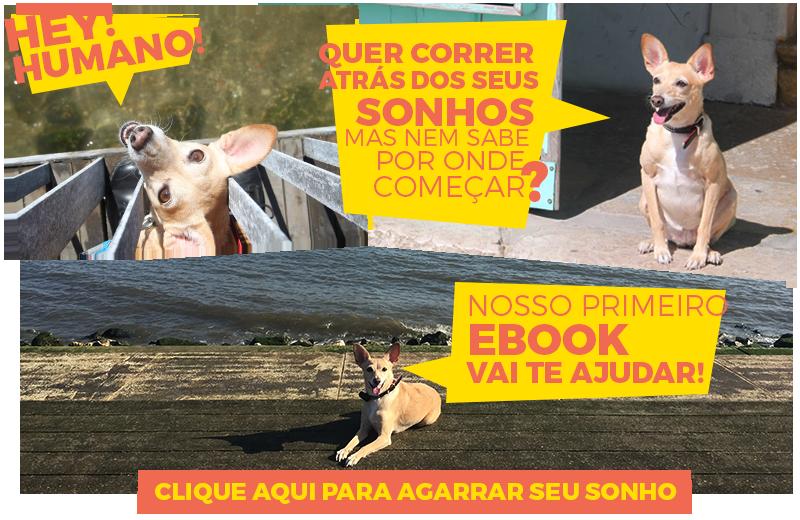 informe_publicitario_da_lisa