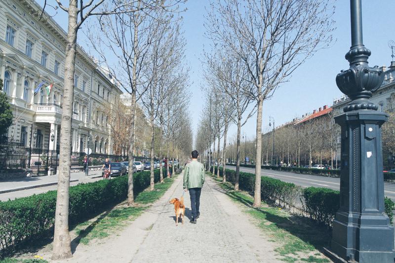 Primeiras impressões de Budapeste - Pequenos Monstros
