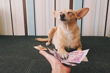 Transferir dinheiro do Brasil para o exterior - A melhor forma! | Pequenos Monstros