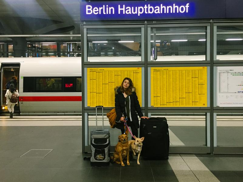 pequenos-monstros-viajar-com-cachorros-de-trem-1